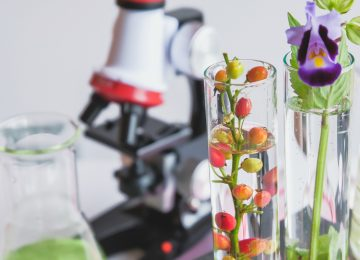 microscope and small plant in test tube , lab biotechnology concept.